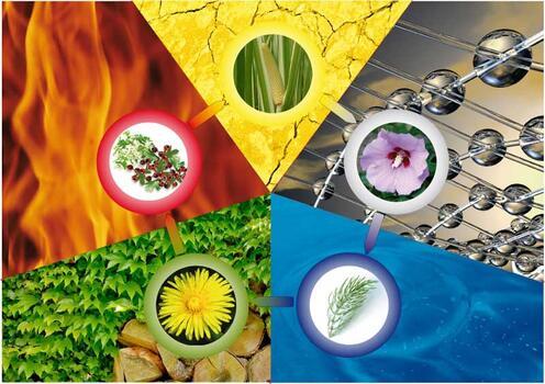 5 Elemente Kräuter